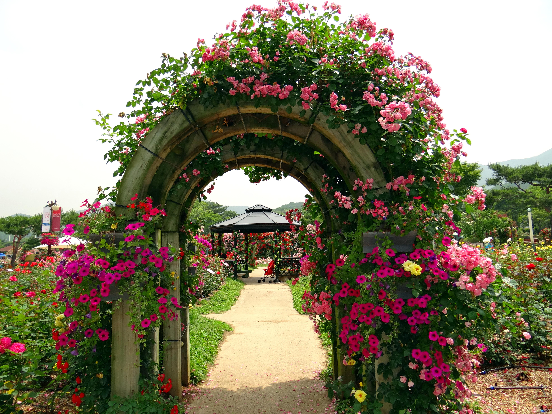 Seoul rose garden festival deceptively blonde for Garden