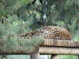 Stupid Cheetahs wouldn't turn around.